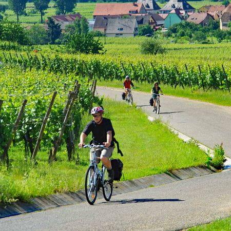 Cyklist vid vingårdar nära Kayserberg
