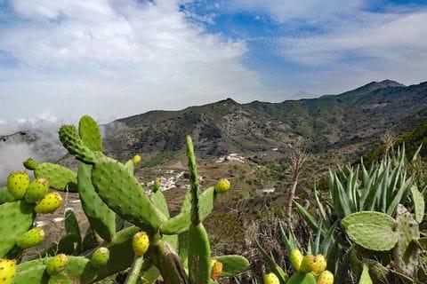 Kaktusar på Tenerife