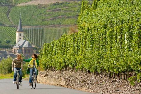 Cykling längs underbara vingårdar på platt terräng