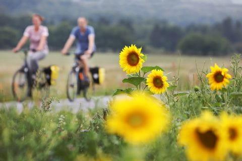 Radfahrer und Sonnenblumen entlang der Kattegatroute