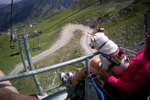 Vandringsresor med hund