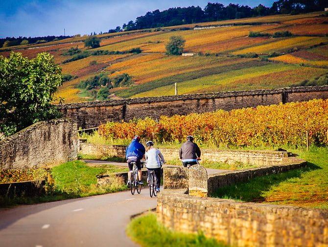 Cykling genom vingårdar